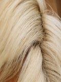 马详细资料(63),毛皮和鬃毛 免版税库存图片