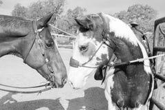 马谈话 图库摄影