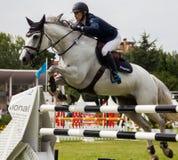 马跳跃的竞争 库存照片