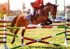 马跳跃的障碍 库存照片