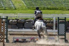 马跳跃 免版税库存照片