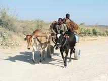 马达加斯加人的运输 免版税图库摄影
