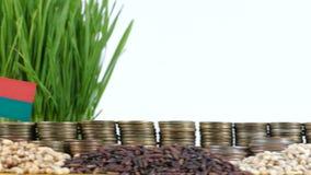 马达加斯加沙文主义情绪与堆金钱硬币和堆麦子 股票录像