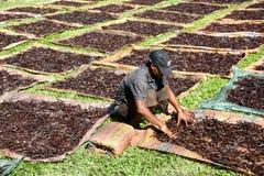 从马达加斯加的香草选择 库存照片
