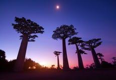 马达加斯加 图库摄影
