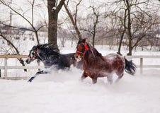 马运行 库存照片