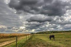 马里兰牧场地 库存图片