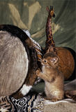 索马里的小猫 免版税库存照片