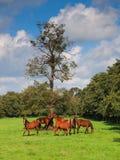 马队在草甸 库存照片