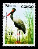 马鞍开帐单的鹳(凹嘴鹳senegalensis),鸟serie 免版税库存图片
