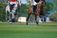 马马球在马球领域竞争 免版税库存图片