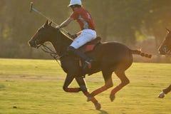 马马球球员乘驾在比赛的一匹马在日落 库存照片