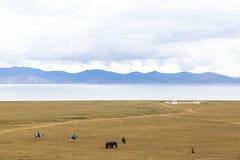 马骑术在歌曲kul湖在吉尔吉斯斯坦 库存图片