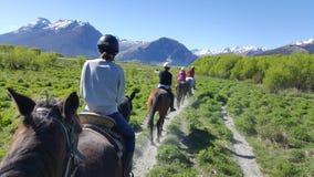 马骑术在Glenorchy,新西兰 库存图片