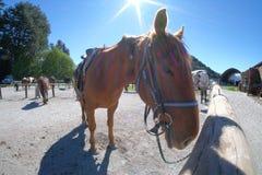马骑术在Glenorchy,新西兰 免版税库存图片