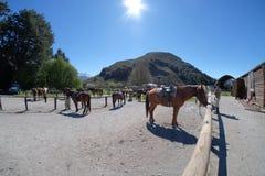 马骑术在Glenorchy,新西兰 图库摄影