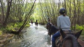 马骑术在Glenorchy,新西兰 库存照片