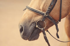 马骑术设备细节 免版税库存图片