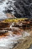 马默斯斯普林斯在黄石国家公园 库存照片