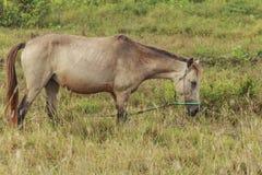 马,与搜寻动物的肥沃kawatuna谷 图库摄影
