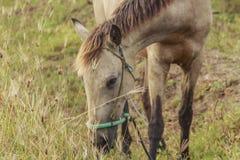 马,与搜寻动物的肥沃kawatuna谷 库存照片