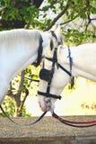 马,两匹马 库存照片