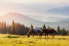 马,在高地牧场地喀尔巴阡山脉的草日落光芒的  库存照片