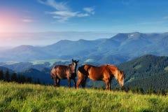 马,在高地牧场地喀尔巴阡山脉的草日落光芒的  免版税库存图片