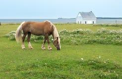 马,牧场地在海边 库存图片