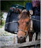 马,自然 免版税库存图片