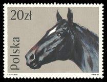 马,英国纯血种马 图库摄影