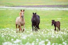 马系列 免版税库存照片