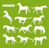 马以各种各样的姿势 免版税库存照片