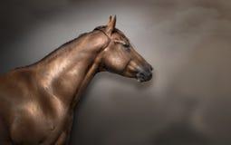 马头在演播室 库存图片