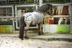 马(小马)在新加坡动物园里 免版税库存照片