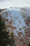 马默斯斯普林斯,黄石国家公园 免版税库存图片