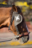 马头特写镜头有马眼罩的 库存图片