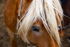 马头的前面 免版税库存图片