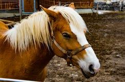 马头的Mcro 免版税库存照片