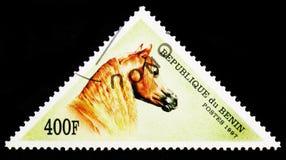 马(马属ferus caballus), serie,大约1997年 免版税库存照片