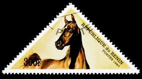 马(马属ferus caballus), serie,大约1997年 免版税库存图片