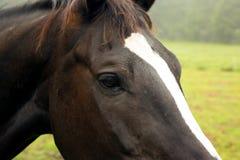 马头,眼睛特写镜头,细节 库存图片