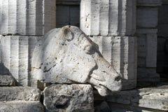马` s头雕刻了在同一材料的专栏背景的石灰石石头外面  免版税库存图片