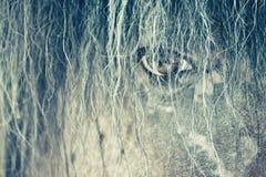 马` s眼睛通过她的头发 库存图片