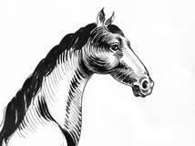 马Head.Horse农场,尼斯干净的马稳定 库存例证