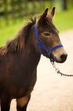 马Head.Horse农场,尼斯干净的马稳定 库存照片