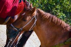 马Head.Horse农场,尼斯干净的马稳定 免版税库存照片
