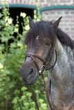 马Head.Horse农场,尼斯干净的马稳定 免版税库存图片