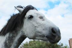 马Head.Horse农场,尼斯干净的马稳定 免版税图库摄影