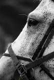 马Head.Horse农场,尼斯干净的马稳定 库存图片